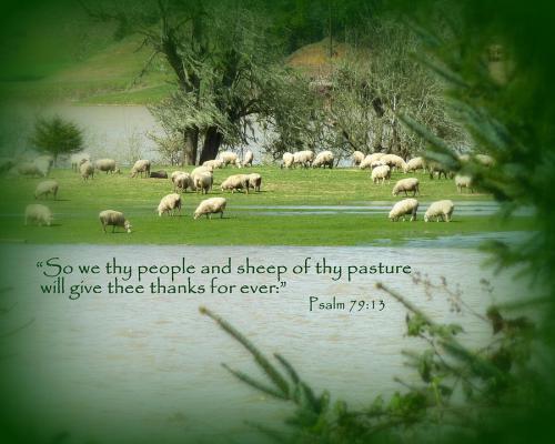 psalm-79-13