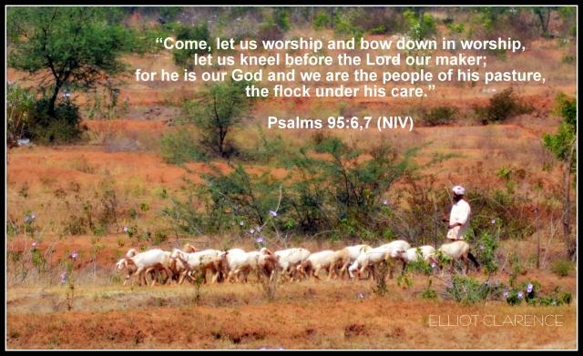 psalm-95-sheep