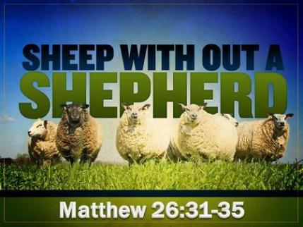 Matthew 26 sheep without