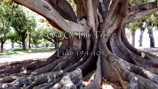 Luke 19 out of the tree