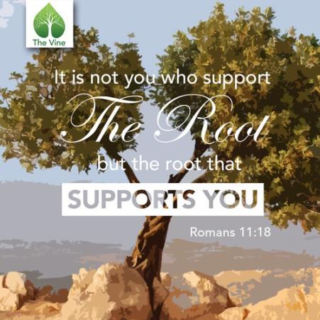 Romans 11 root