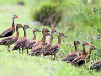 2 Timothy 3 ducks