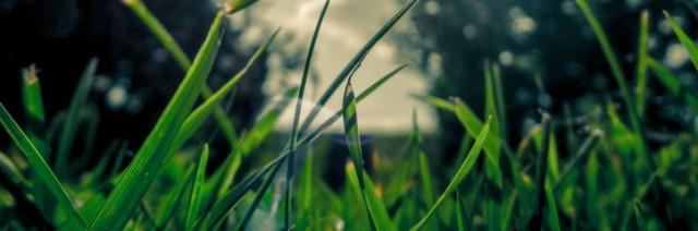 2 Peter 1 grass growing