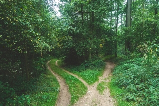 Psalm 1 two roads