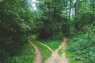 Psalm 1 two roads