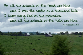 Psalm 50 10
