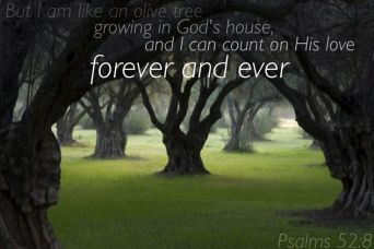 Psalm 52 Gods love