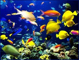 Psalm 104 fish