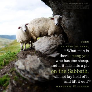 Matthew 12 sheep