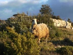 Matthew 18 lost sheep