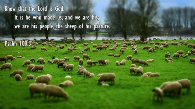 Matthew 18 sheep of His.jpg