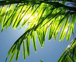 Matthew 21 palm