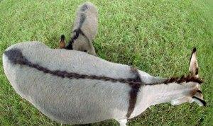 Mark 11 donkey's back