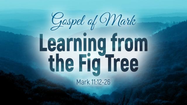 Mark 11 learning.jpg