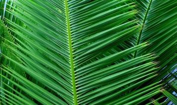 Mark 11 palms