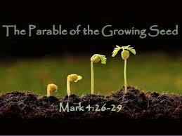 Mark 4 growing seed