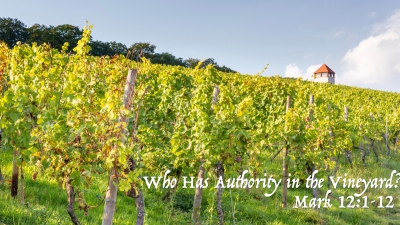 Mark 12 authority in the vineyard.jpeg