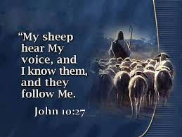 John 10 my sheep