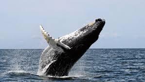 Genesis 1 whales