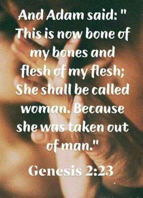 Genesis 2 23