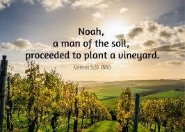Gnesis 9 soil