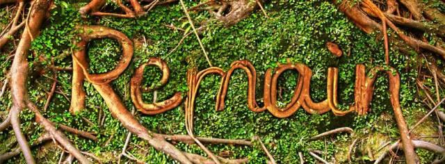 John 15 branches