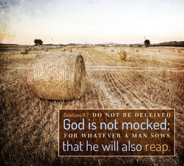 Genesis 28 reap what you sow