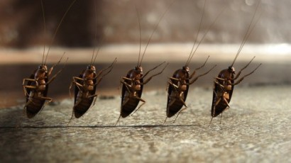 Exodus 8 roaches