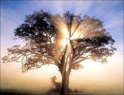 Genesis 35 tree where