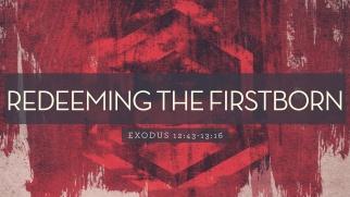 Exodus 13 first born