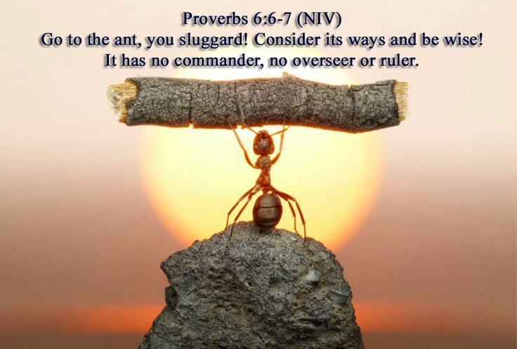Proverbs 6 strong ant