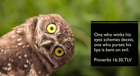 Proverbs 16 owl