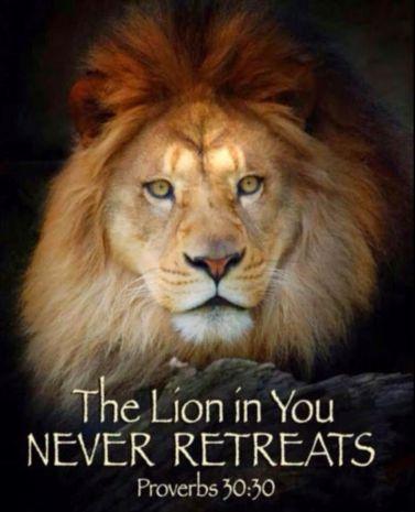 Proverbs 30 30 lion
