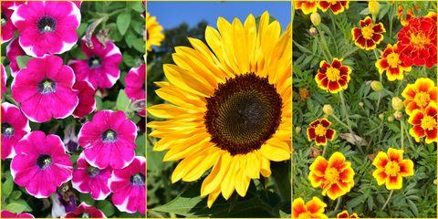 Matthew 13 flowers